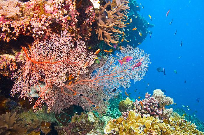 The Great Barrier Reef, Australia.