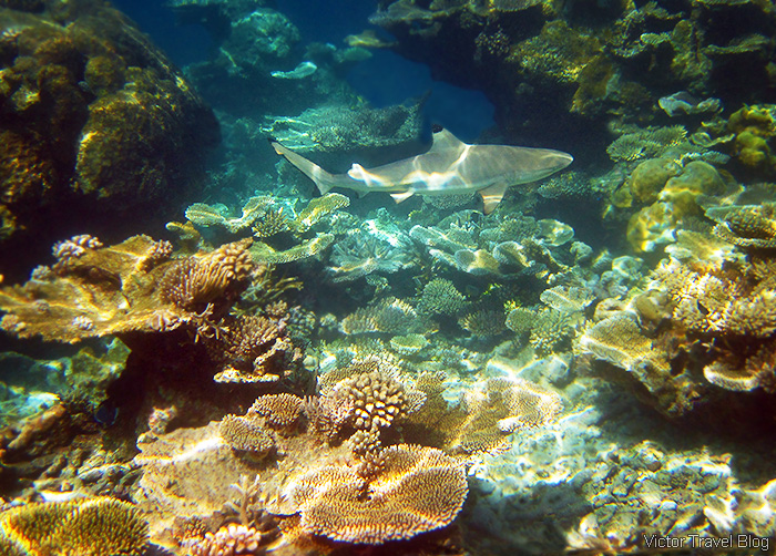 The Best Coral Reef Locations the Maldives or the Great Barrier