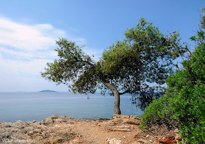 One of the Halkidiki beaches, Greece.