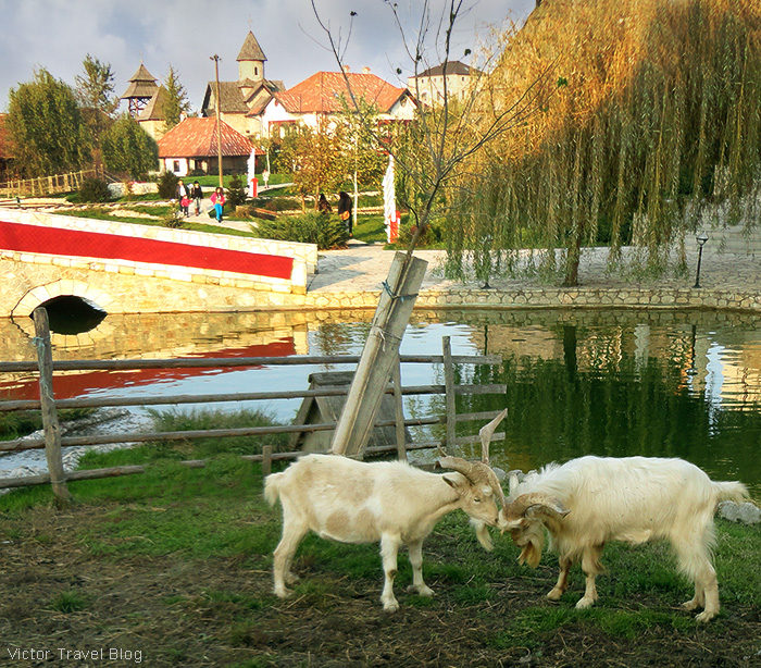 Goats. The traditional village of Stanisici, Bosnia.