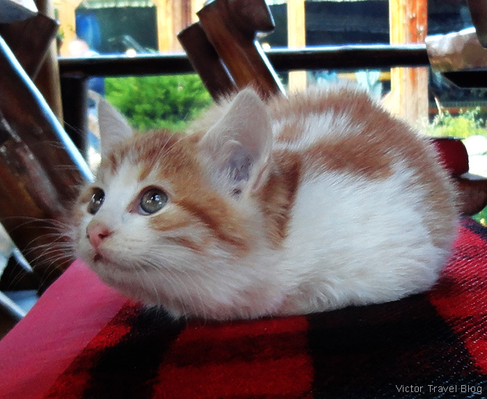 A kitten. The traditional village of Stanisici, Bosnia.