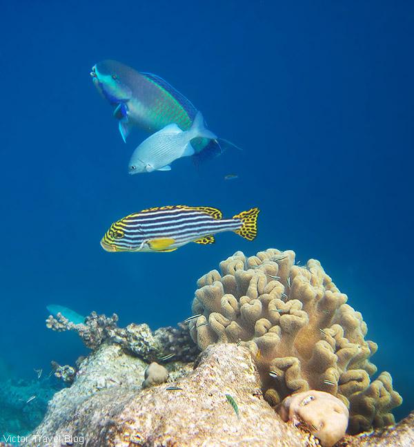 Underwater life of  Fihalhohi Island Resort, the Maldives.