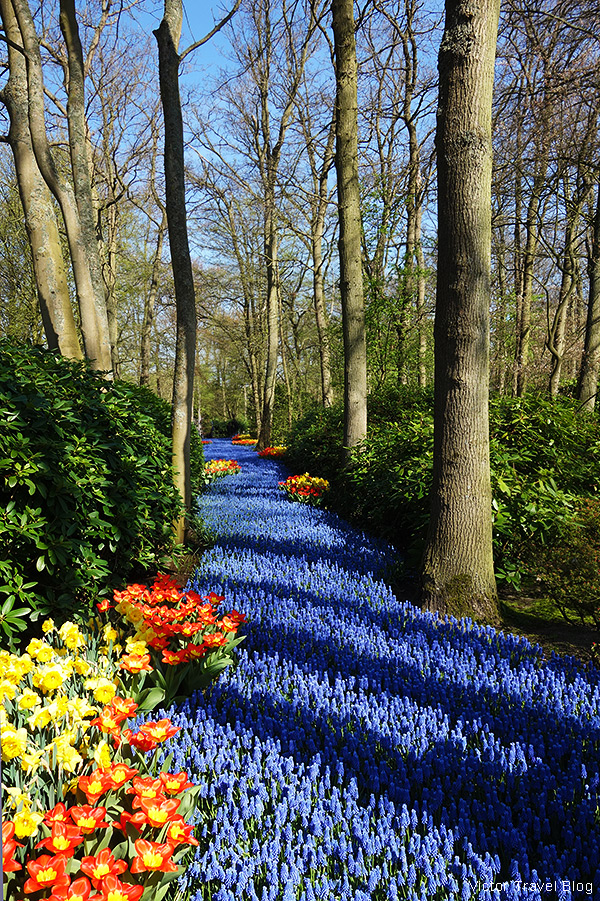 Flower river. The Keukenhof Tulip Gardens, Holland, the Netherlands.