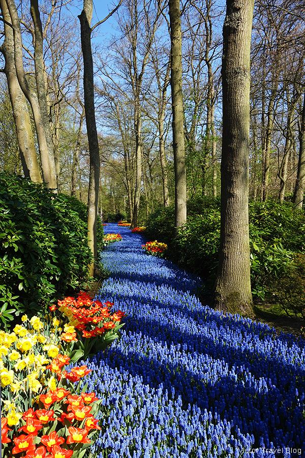 Flower river. The Keukenhof Tulip Gardens, Holland, the Netherlands.