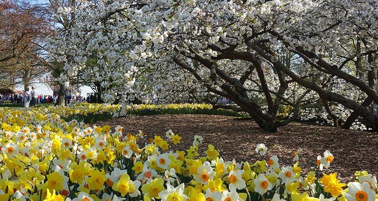 The Keukenhof Tulip Gardens, Holland, the Netherlands.