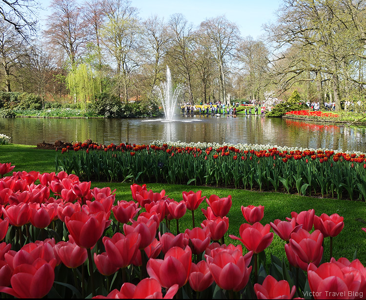 The Keukenhof Tulip Gardens, Holland, the Netherlands.