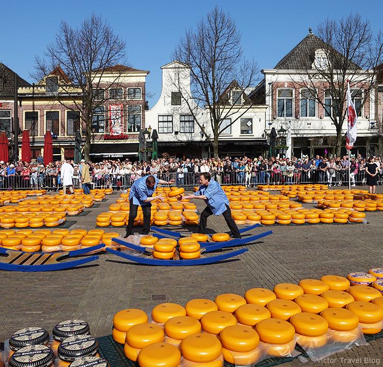 The cheese market in Alkmaar, the Netherlands.